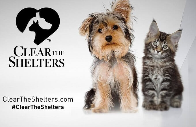 Loudoun County Animal Services hosts 'Clear the Shelters' this Saturday