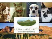 Score a New Pet at Animal Care and Control's March Madness