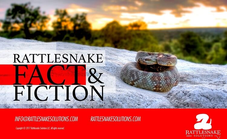 Rattlesnakes! Fact & Fiction